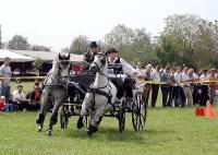 Vrani se konji igrali 2005