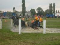 Vrani se konji igrali 2008