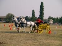 Vrani se konji igrali 2012
